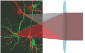 Femtosecond Lasers Power New Approaches in Optogenetics