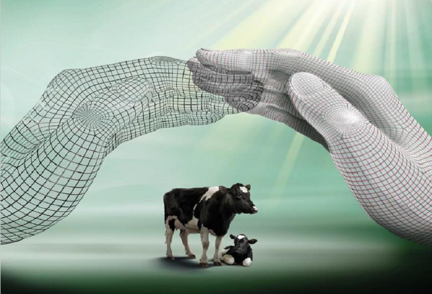 گاو ها هوش حرارتی دارند