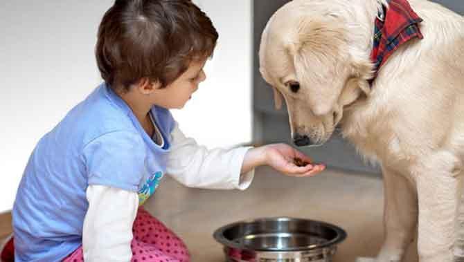 تاثیر حیوانات خانگی بر تعاملات اجتماعی افراد دارای اتیسم(اوتیسم)