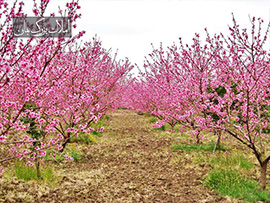 باغ و باغچه 1500متر در کهنز شهریار