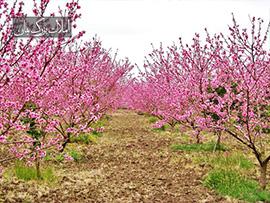 فروش باغ و باغچه 1000متری در زیبادشت