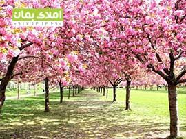 1232متر باغ و باغچه در ملارد