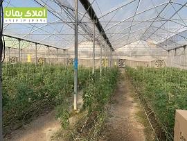 6550 متر گلخانه در باغدشت