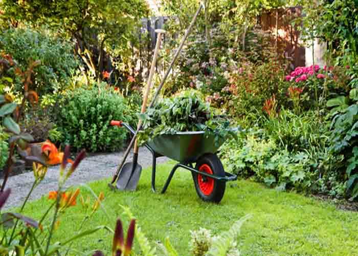 اصول باغبانی