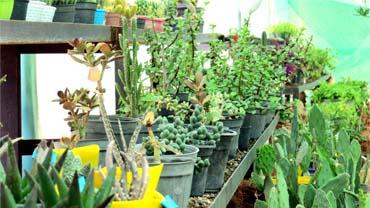باغبانی درمانی