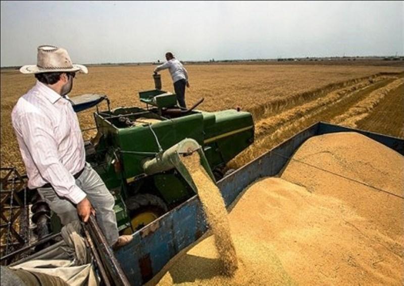 امسال 10.5 میلیون تُن گندم در کشور برداشت می شود