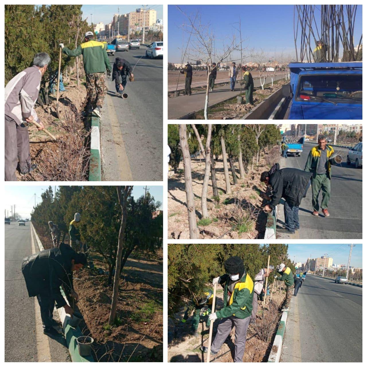 تداوم کاشت انواع گل و درخت در شهر پرند