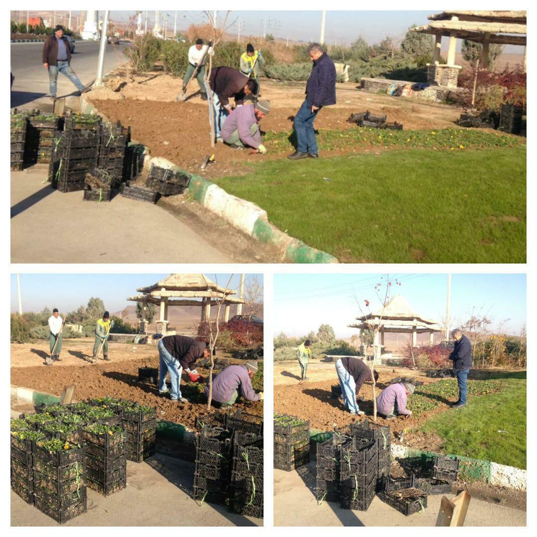اجرای طرح کاشت گل های فصلی در ورودی شهر پرند
