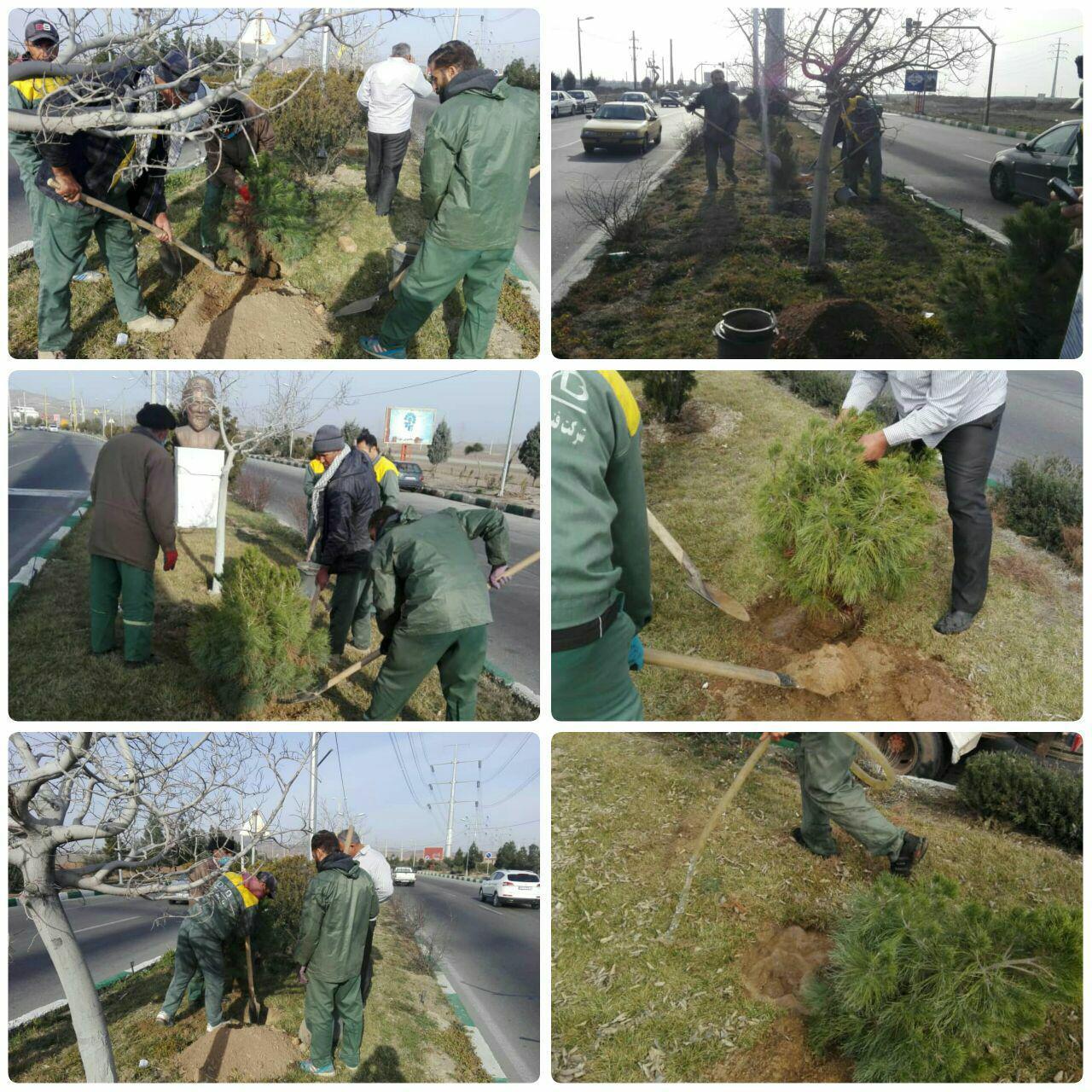 اجرای عملیات کاشت بیش از ۶۰۰ اصله درخت و درختچه در ورودی شهر پرند