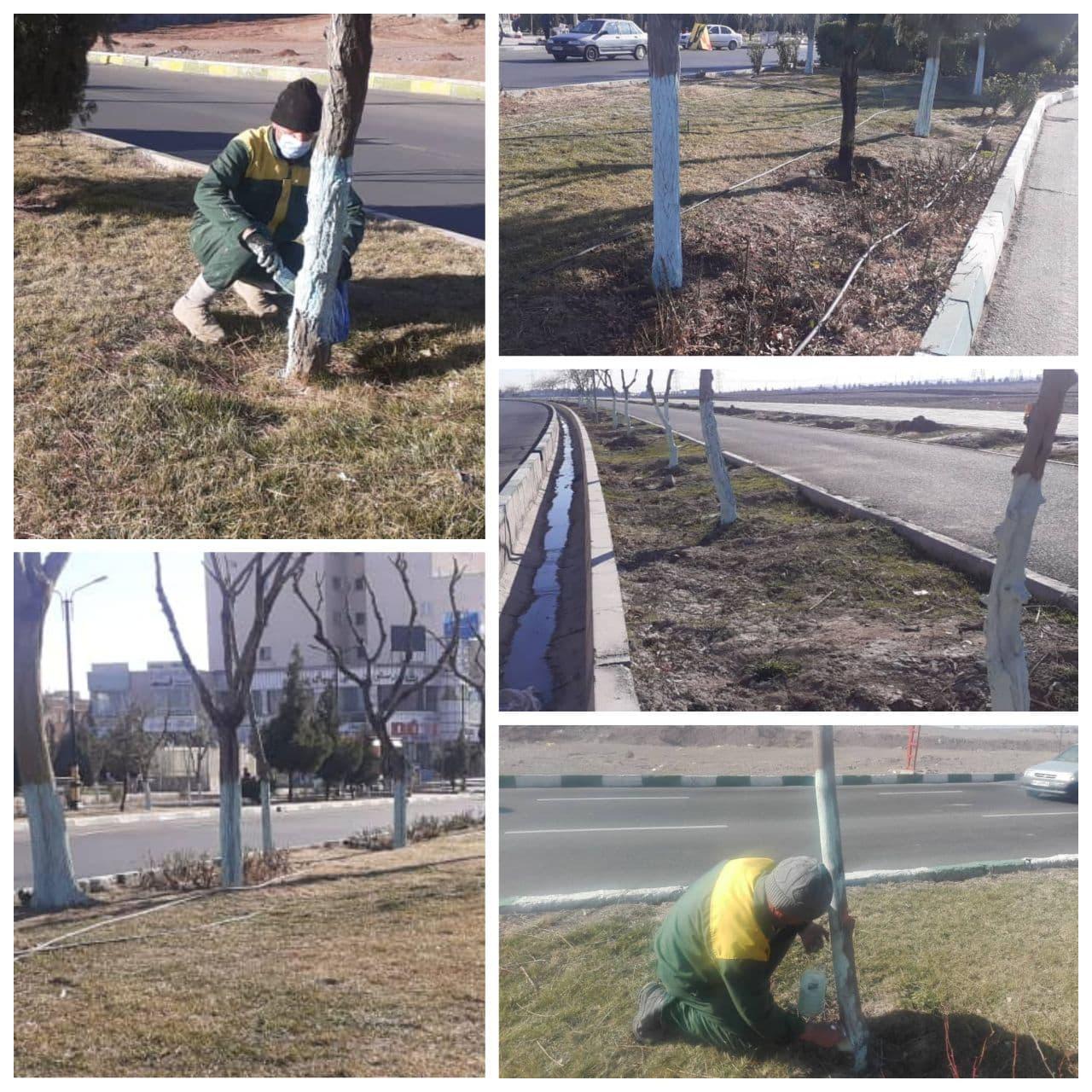 اجرای عملیات سم پاشی زمستانه درختان شهر پرند