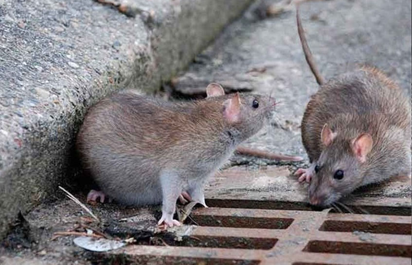 """""""مرگ موش نانویی"""" هم تولید شد!"""