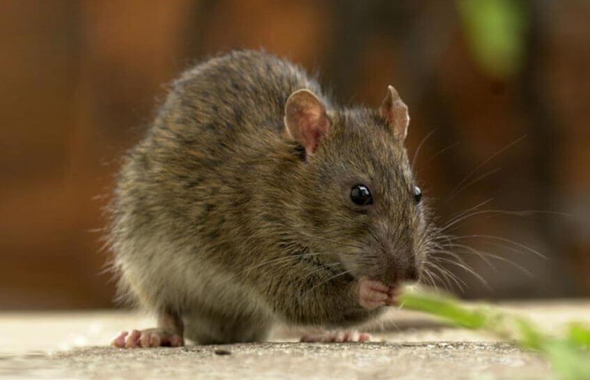 آشنایی با موشها