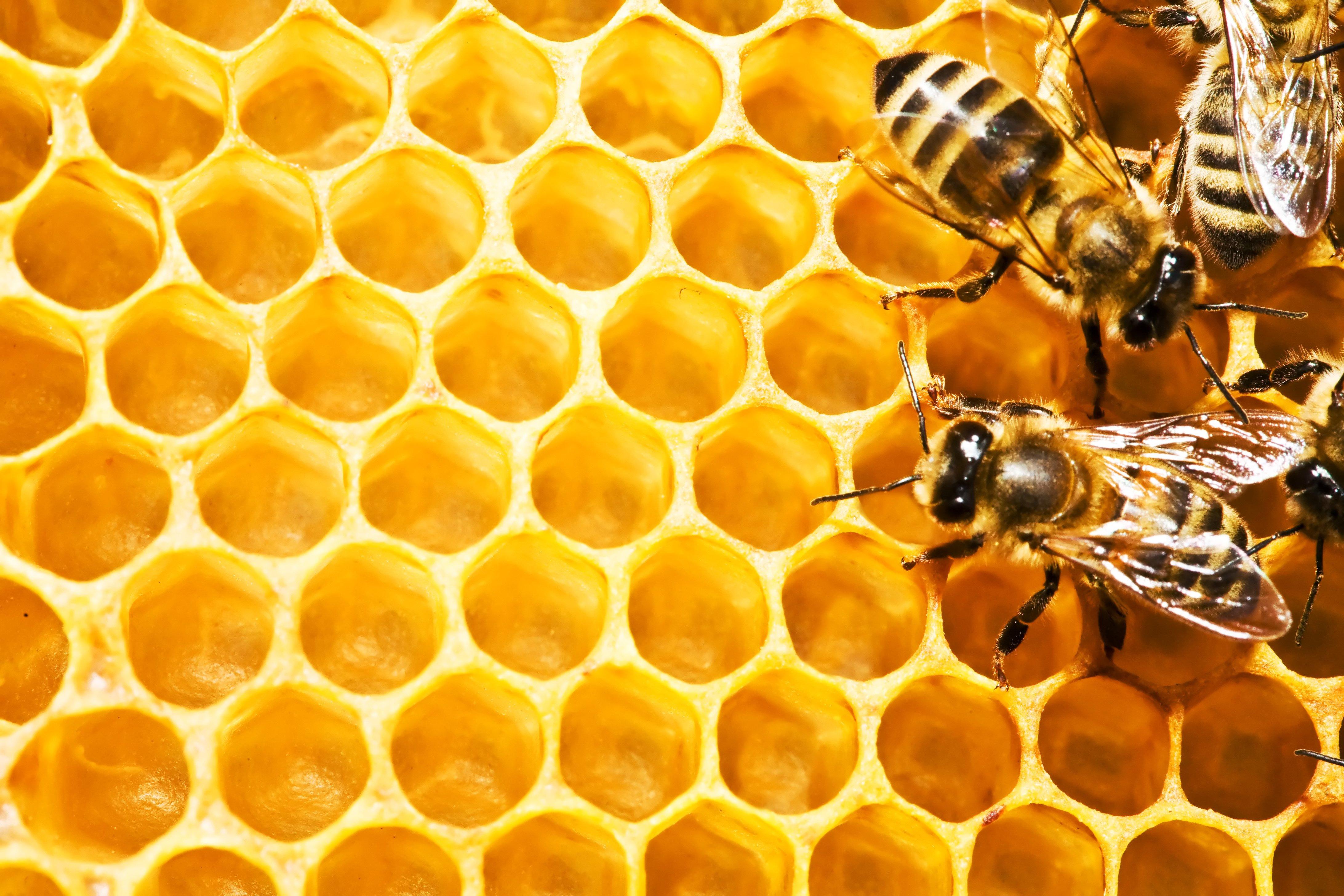 نحوه ایجاد عسل