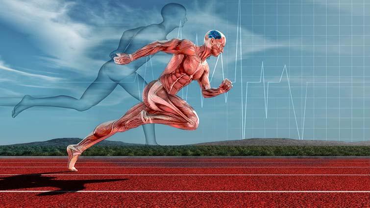 مکمل گیاهی اکیناسه؛ آیا به واقع سبب بهبود کارایی ورزشکاران استقامتی می شود ؟
