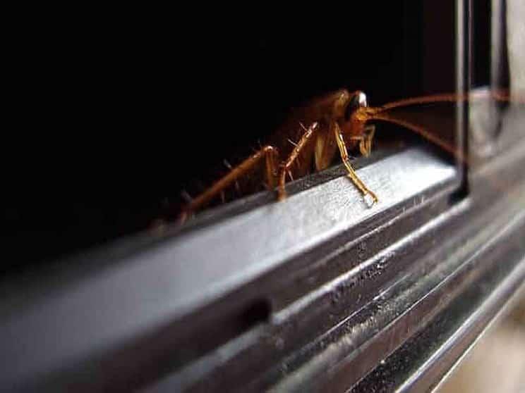 لانه کردن انواع حشرات موزی در مایکروفر