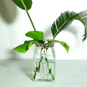 گلدان شیشه ای (نیلوفر)