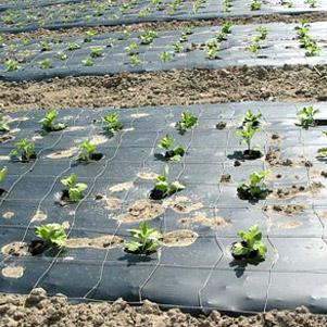نایلون مالچ کشاورزی (سمن پلاست)