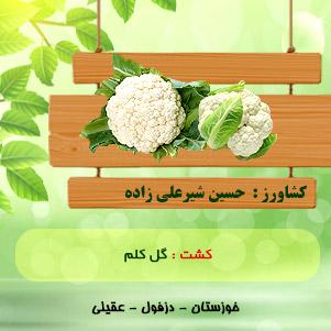 اقای شیر علی زاده (گل کلم)