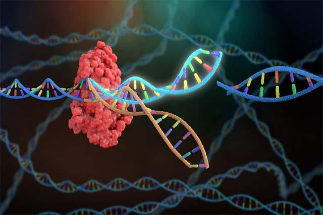 تکنولوژی Cas9/CRISPR و کاربرد آن در درمان بیماریهای ژنتیکی