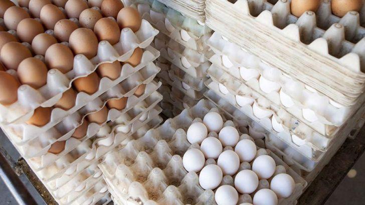 20 هزار تن صادرات تخم مرغ در شش ماه