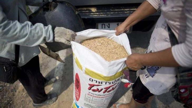 ممنوعیت صادرات خوراک دام و طیور لغو شد