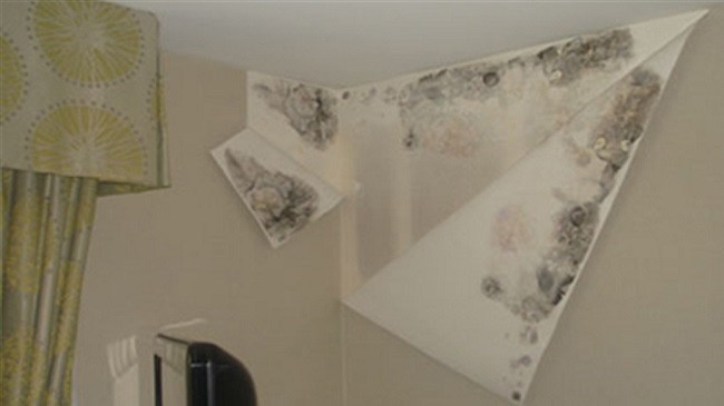 نشت آب باعث کنده شدن و از بین رفتن کاغذ دیواری شده است