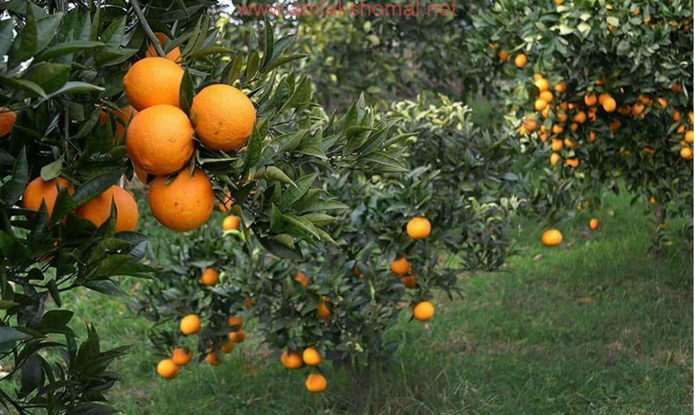 خرید اینترنتی پرتقال