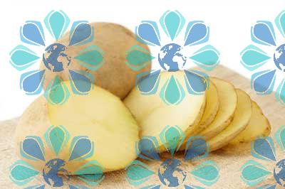 هشدار درباره تبعات رفع ممنوعیت صادرات سیب زمینی - تهران پیشرو - شرکت ترخیص کالا