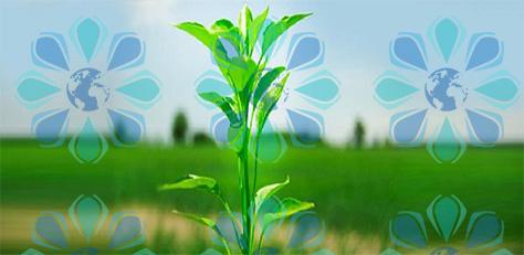 ضوابط قرنطینه گیاهی ترانزیت خارجی محموله های گیاهی – تهران پیشرو – شرکت ترخیص کالا