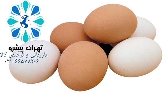بخشنامه 43 سال 97 - ثبت سفارش و واردات تخم مرغ خوراکی