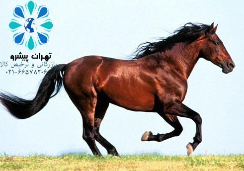 بخشنامه 56 سال 97 - مجاز نبودن صادرات اسب پرورشي از نژادهاي اصيل و اسب کار