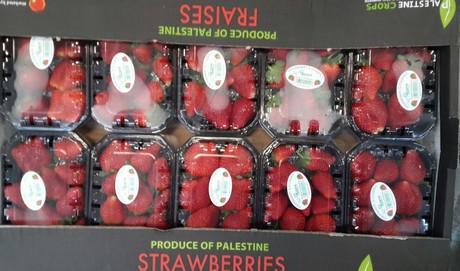 صادرات و بسته بندی میوه