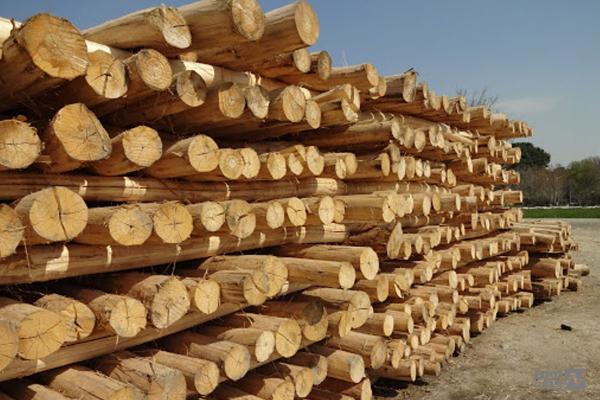 کاربرد چوب صنوبر