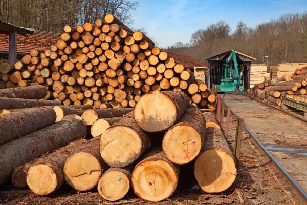 چگالی چوب